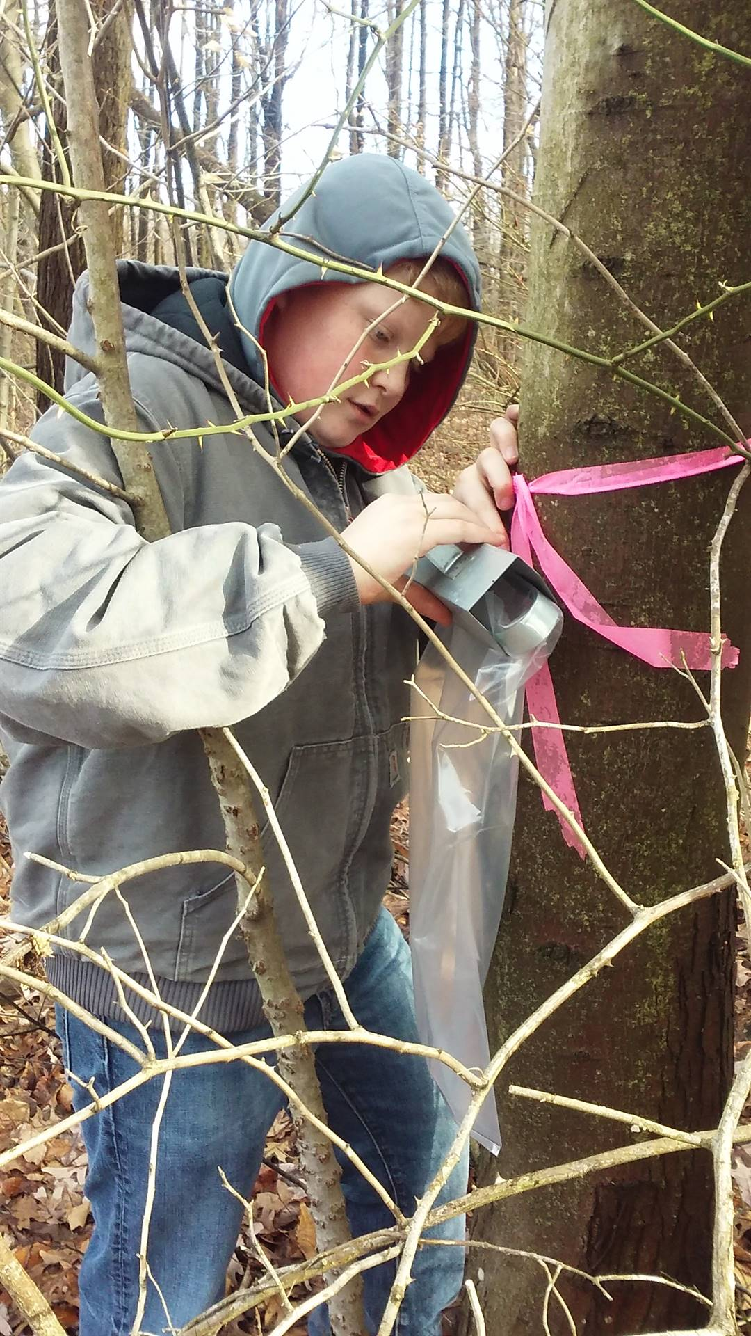 BMS Environmental Club Tapping Maple Trees for Sap Collection